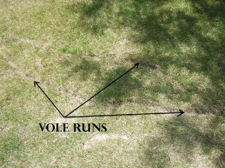 Vole Damage